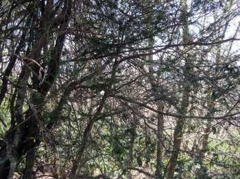 treetangle4