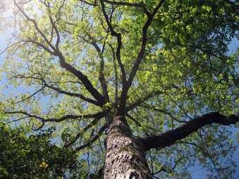 uptree
