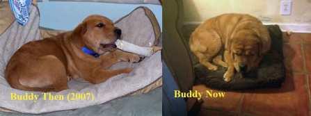 Buddy copy